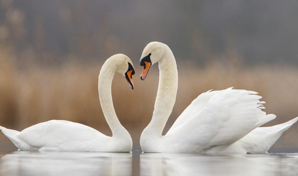 Inima secreta a Deltei