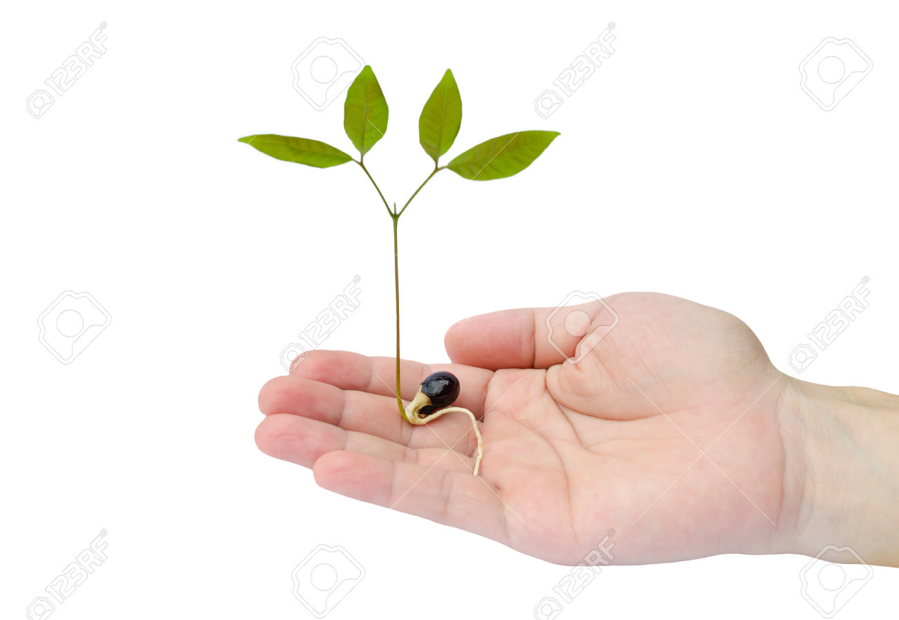 Green sprout growing from seed in hand on white background