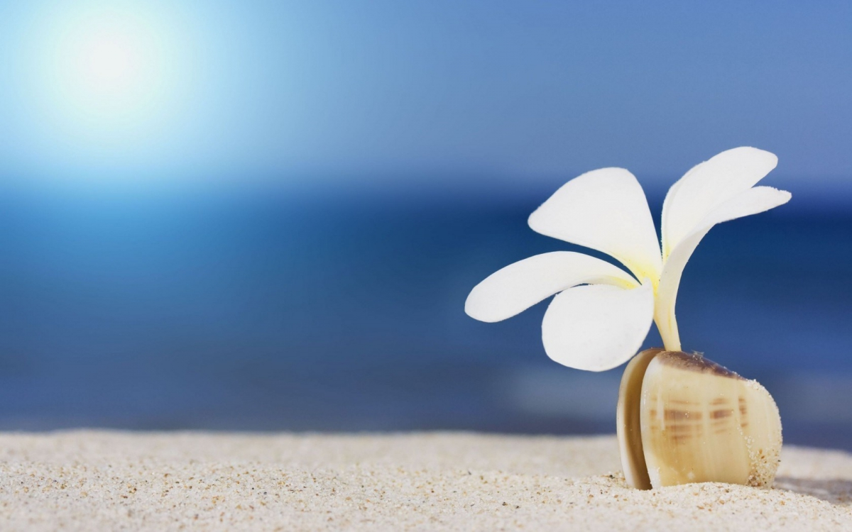 6801188-lovely-beach-shell-wallpaper