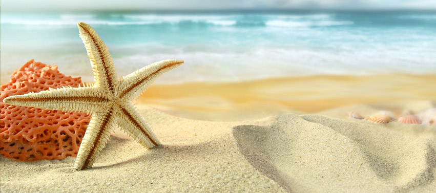 beach-starfish